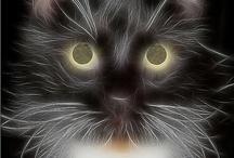 Animals - Cats / by Sara Schmanski