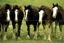 A Horse of Course / Horses and ponies