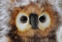 Animals - Owls / by Sara Schmanski