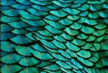 turquoise blues