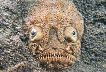 Terrifying Nature / Real animals, plants and phenomena that will make you crap your pants.