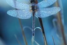 Dragonflies / by Sharon Guzman