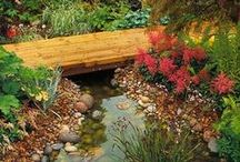 Dry Creek Beds and Rain Gardens / A collection of ways to transform runoff and ditches into lush temporary water features that collect, absorb and divert rainfall.
