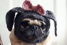 Doggy Couture, Recipes & Ideas! <3 / by Andrea Dawn