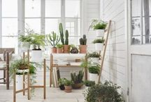 Plants / Plants are one of the big home interior trends for 2017. This board provides great inspiration for how to introduce and style plants in your home interior
