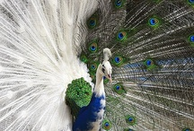 Bird is the Word / Birds / by Katie Clifford