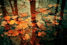 Days of Red and Gold / Autumn, otherwise known as fall.
