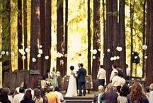 Wedding / by Julia Hewes