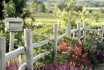 Jardins  / A personalidades das flores: cada uma com sua cor, perfume, e forma.