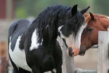 Livi's Horsey Ponies