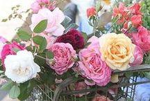 Flowers {roses}