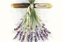 Flower Inspiration {lavender}