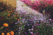 Seasonal Wonderment / Nature is the art of God.