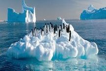 Antarctica and all the Penguins / Travel in Antarctica.