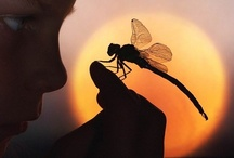 Dragonflies / by Marie Campbell