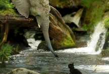 ♥GENTLE GIANTS♥ / My love of (mostly) elephants.  But, I do love whales too. / by Marie Campbell