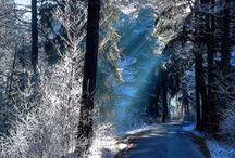 Winter Wonderland / by Sandra Norman
