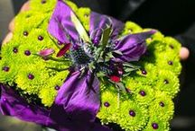 Color: Purple and Lime / by Sandra Norman