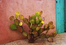 cacti + succulents /