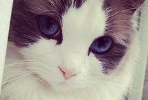 Cats / by Jennifer Sutton