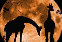 Amazing Planet: Fauna / Animals / by Jennifer Sutton