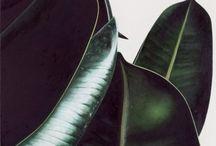 foliage /