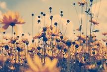 Flowers / by Kimmy Oishii