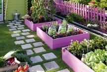 my garden:)  / by Sandy Kennedy