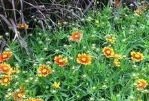 Plants Plants Plants! 2014 Arrivals / Some Spring 2014 arrivals.