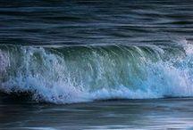 Lingua Maris / The language of the seas..