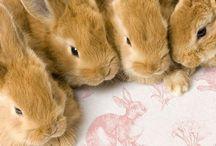 Everybunny Needs Some Bunny Love