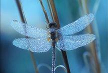 Flutter By's / Flutter bys of all kinds
