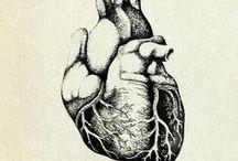 hearts / by Helichrysum Bracteatum