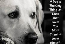 Ole Bear dog  / by Teresa Pinson