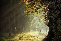 AUTUMN BEAUTY / Beautiful autumnpictures