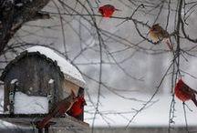 Winter's Beauty / by Teresa Pinson