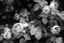 Inspirational - Vertical gardens / Grow it different
