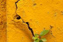 Lemon / All things yellow