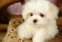 Most adorable animals