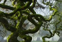 Beautiful Trees!!!! / by Ashley Riddle