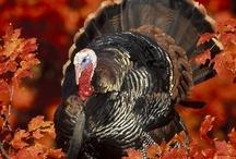 Thanksgiving / by Sheila Wheeler