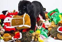 Gifts for Your Furry Doggie Friends / We've turned to our furry four-legged crew for their top picks for under the tree! From Java (who loves a good ball) to Misty (who loves a squeak toy) to Menace (who loves anything soft and fuzzy), here are their top picks from Santa in 2017 for your best dog friends!