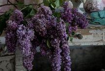 making myself like purple... / because Pantone says I should.... #2014coloroftheyear