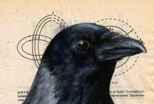Ravens and their Magic / Ravens and Crows, which are magical by nature. #ravens #magic #magical #crows