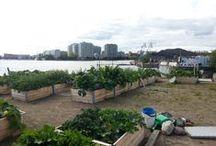 Kaupunkiviljely - Urban farming