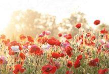 Flowers / by Madison Svegdahl