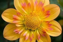 Flowers / I love flowers / by Sonja Salley