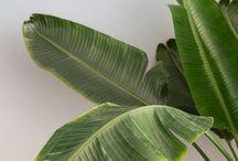 perky plants