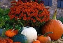 Fall / Fall decorations and ideas / by Alicia Hays