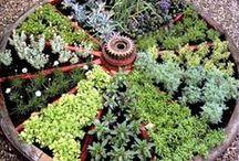 Garden / by Kayla Bloom
